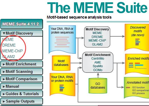meme-suit-motif-finding