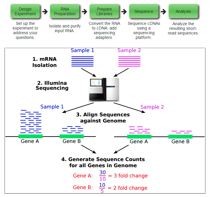 overview-of-rna-seq-technology