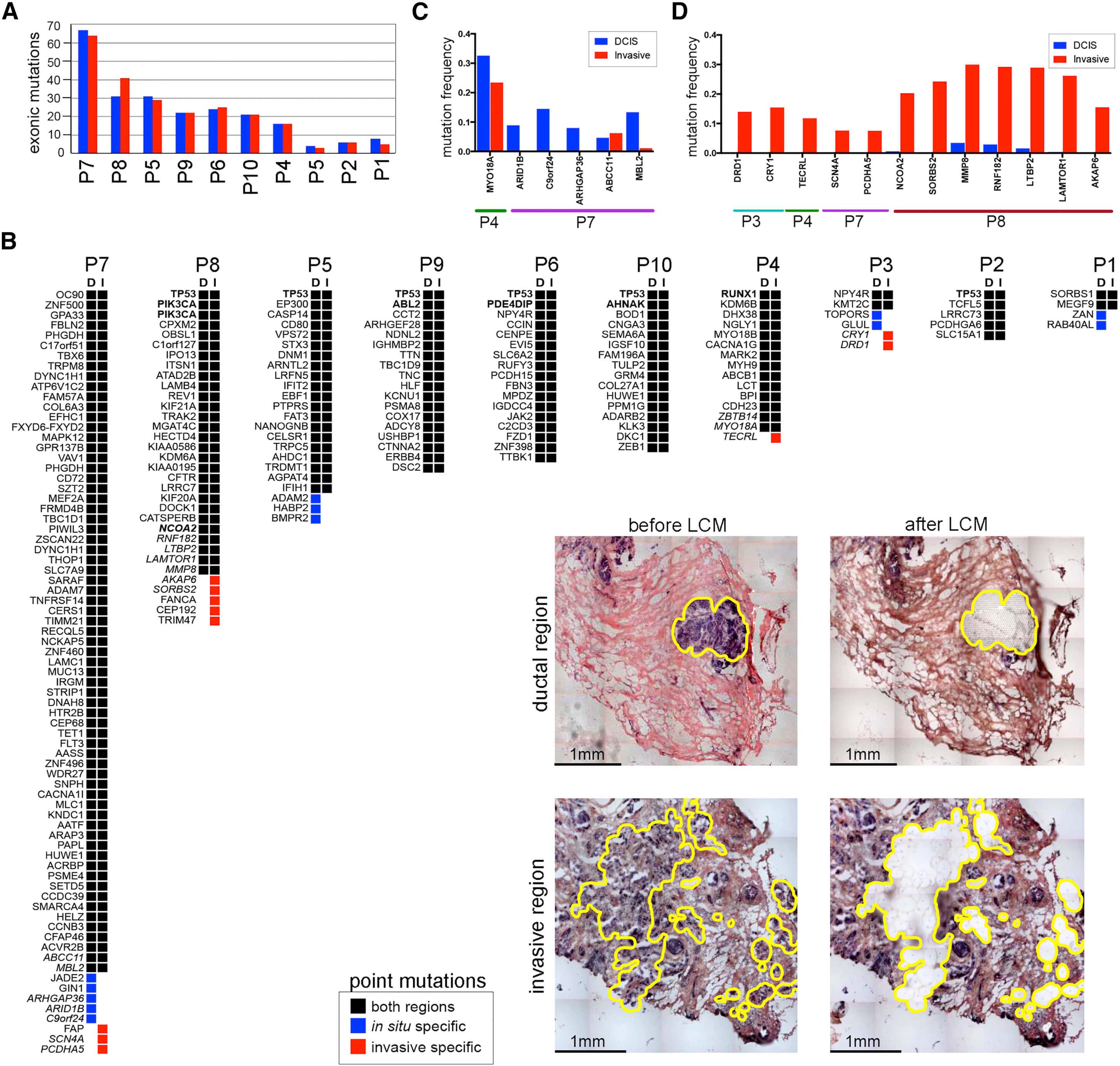 空间单细胞DNA测序技术流程