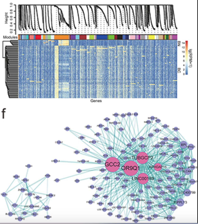 wgcna-hub-genes