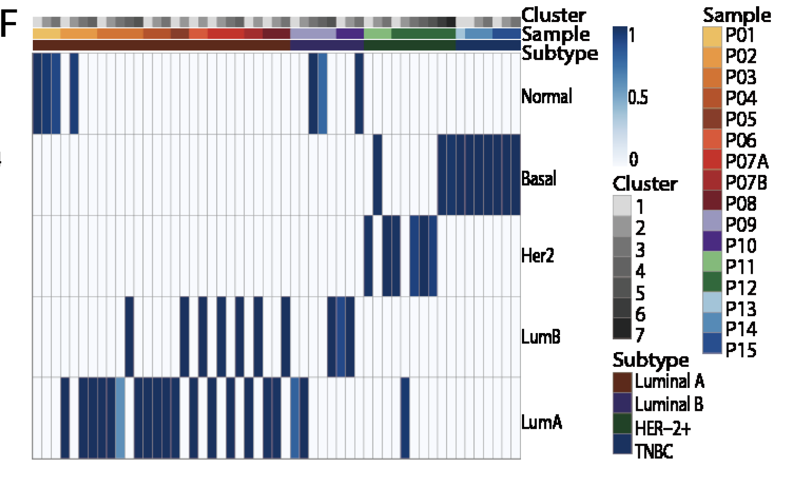 PAM50-heatmap-cells-of-patients.png