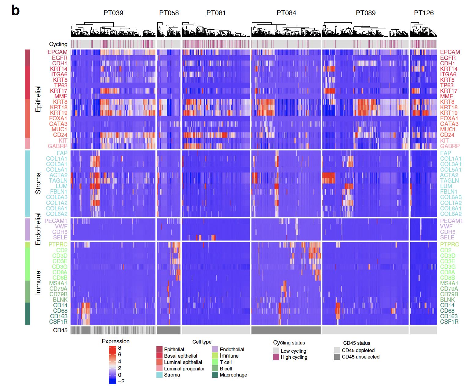 celltype-heatmap-of-patients.png