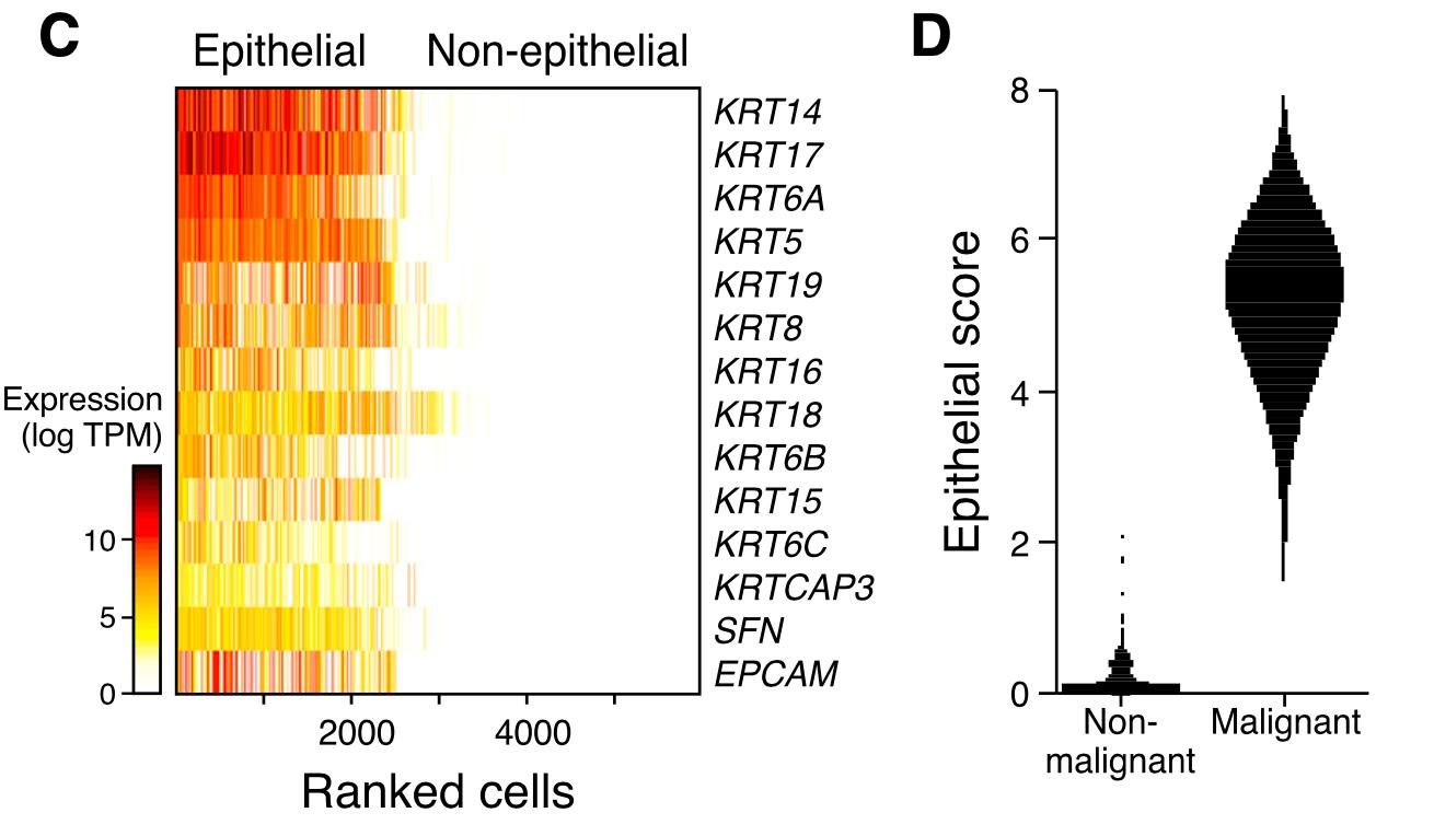 上皮细胞的标记基因热图