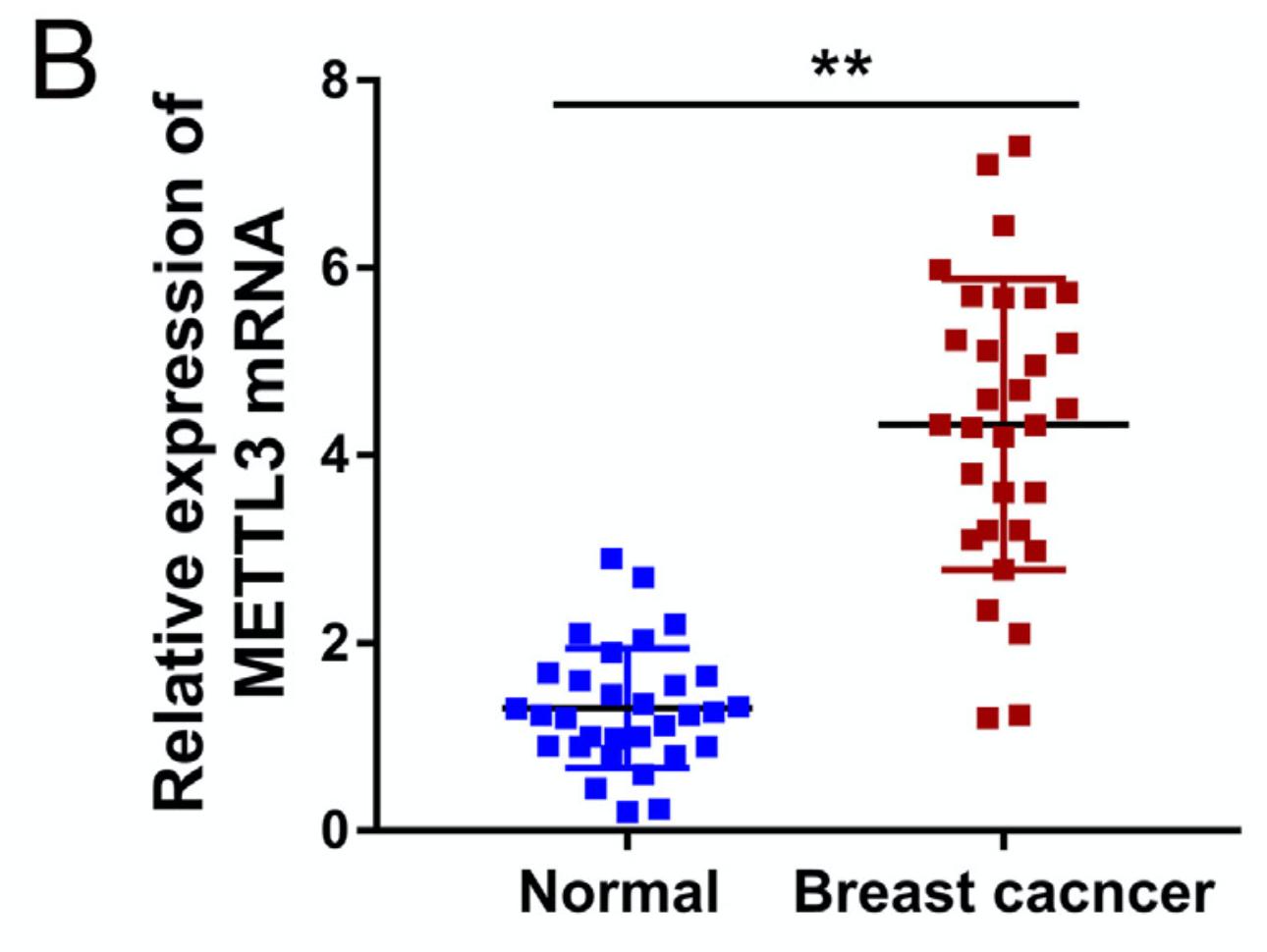 RT-PCR 检查mRNA是否高表达