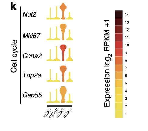感兴趣的通路里面一系列基因在不同亚群的表达量差异情况