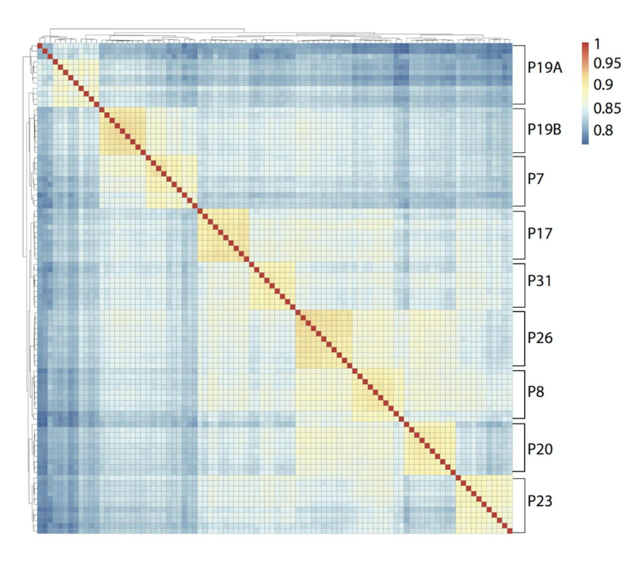 类器官单细胞转录组表达矩阵相关性热图