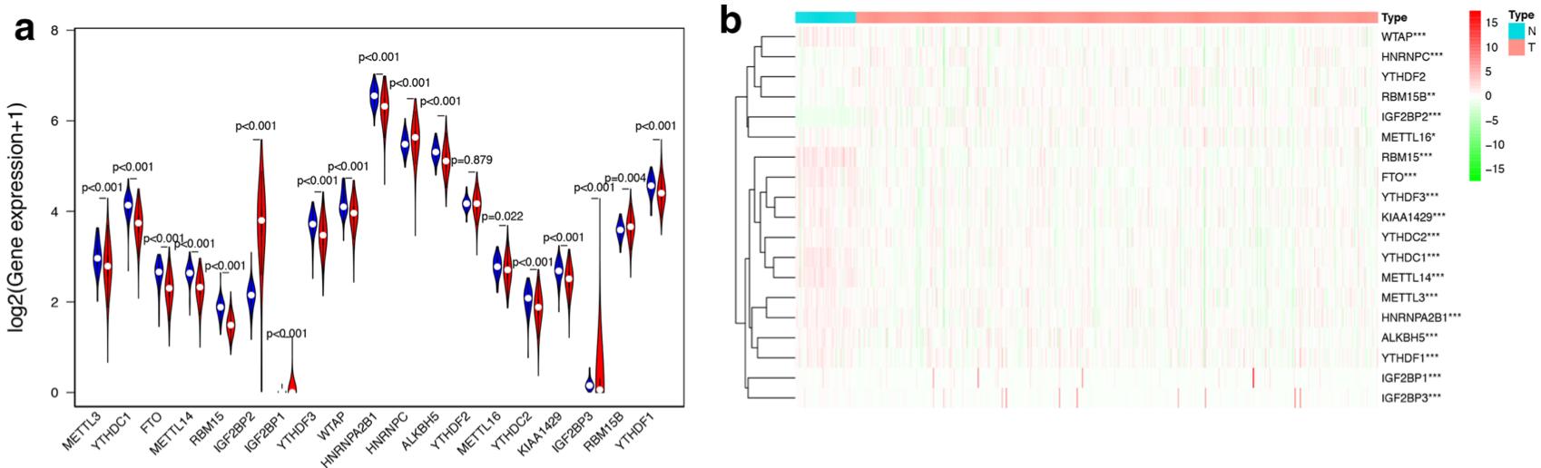 第2篇的m6a相关基因集的表达量差异热图
