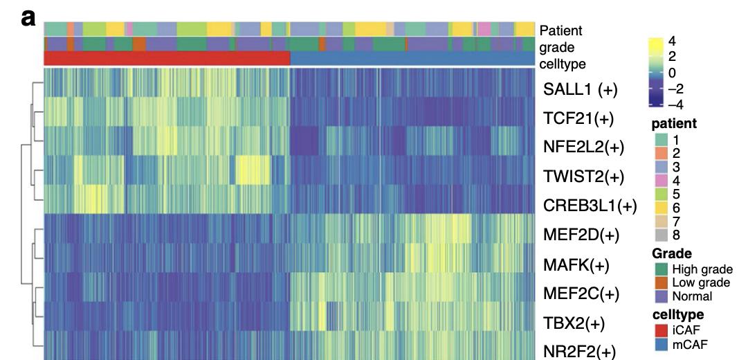 TF的全部细胞的AUC值进行热图可视化