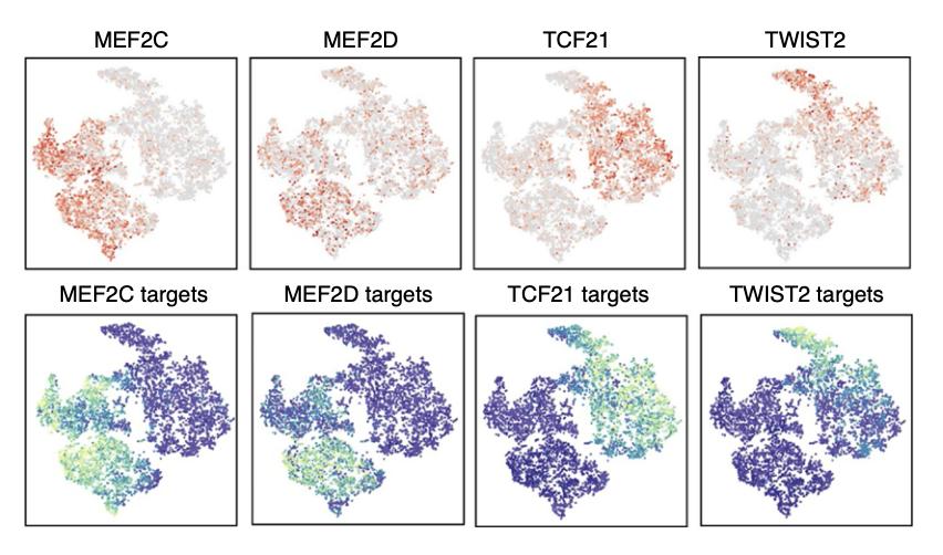 TF各取2个进行tSNE的可视化