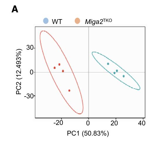 Partial Least-squares discrimination analysis (PLS-DA)