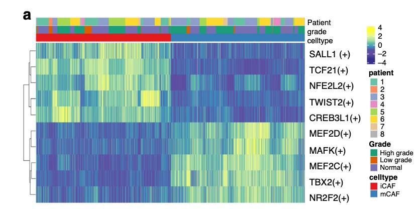 原文fibo细胞亚群走这个转录因子分析
